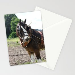 Clydesdale  Stationery Cards