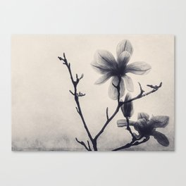 Tree Bloom in Black and White Canvas Print