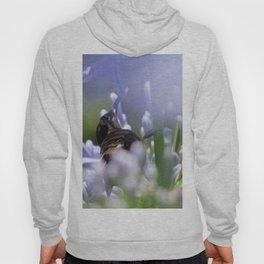 Honeybird amongst the agapanthas Hoody