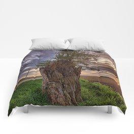 Stump Comforters