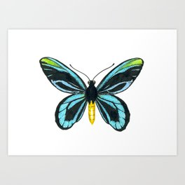 Queen Alexandra' s birdwing butterfly Art Print