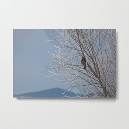 Red Shoulder Hawk Metal Print