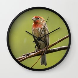 House Finch in the Rain Wall Clock
