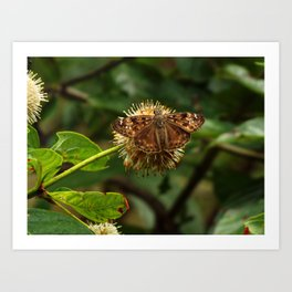 Moth on a Puffball Art Print