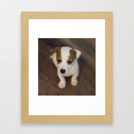 Little puppy dog Framed Art Print