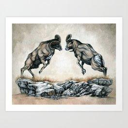Fighting Bighorn Sheep Rams Art Print