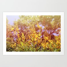 Sun shine on me! Art Print