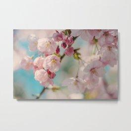 Sakura 08 Metal Print
