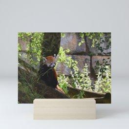 Ginger cat Mini Art Print