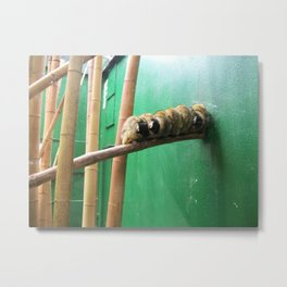 Monkeys in a row Metal Print
