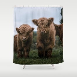 Scottish Highland Cattle Calves - Babies playing II Shower Curtain