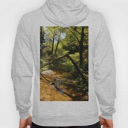 Muir Woods Impression Hoody