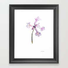 Flowers of the tree *Handroanthus sp* Framed Art Print
