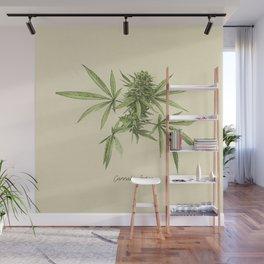 Vintage botanical print - Cannabis Wall Mural