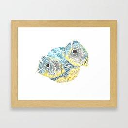 Four Eyed Butterfly Framed Art Print