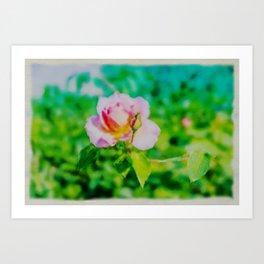 A pale pink rose watercolor Art Print