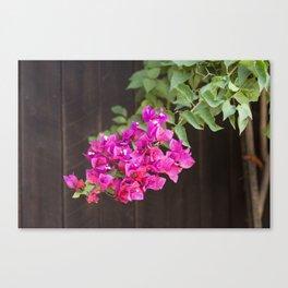 Pink Bougainvillea Canvas Print