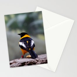 Troupial Feathers Stationery Cards