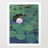 Lily pad- Portland Oregon  Art Print