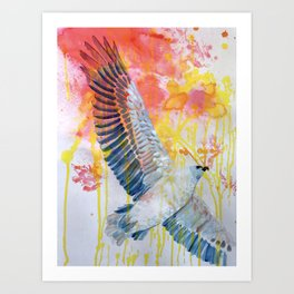 bird art: white bellied sea eagle Art Print