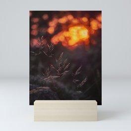 Sunrays Through The Woods. At sunset Mini Art Print