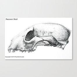 Raccoon Skull Study Canvas Print