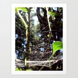 Web of Life Art Print