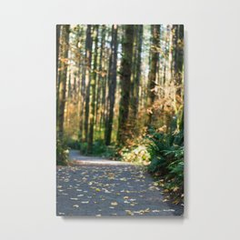 Forest trails Metal Print