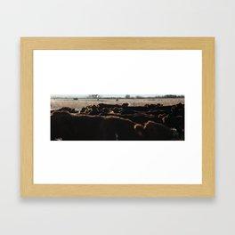 Cows, Cows, Everywhere.  Framed Art Print