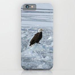 Bald eagle on ice iPhone Case