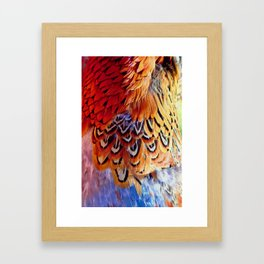 Pheasant Feathers Framed Art Print