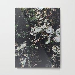 dramatic moody nature Metal Print
