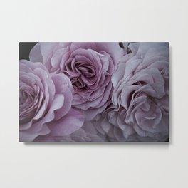 Dusky Roses Metal Print