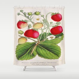 Strawberry Delights Vintage Botanical Floral Flower Plant Scientific Illustration Shower Curtain