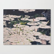 Water lilys Canvas Print
