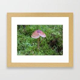 Split Fungi Framed Art Print