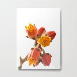 Landscapes Nature Flowers Metal Print