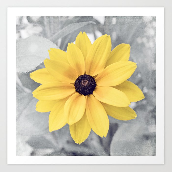 Yellow Grey Flower Photography Yellow Gray Nature Floral
