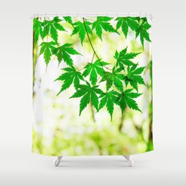 Green leaves of Japanese maple Shower Curtain
