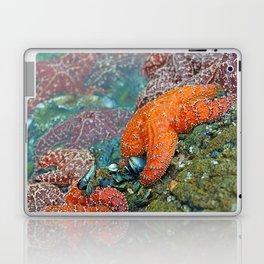Summer Starfish Laptop & iPad Skin