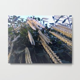 Looking Up At A Hanging Plant Metal Print