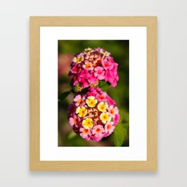 Lantana flowers Framed Art Print