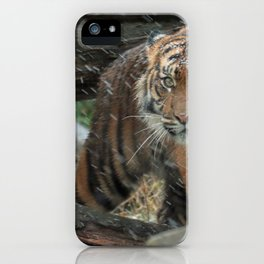 Spectacular Noble Grown Jungle Tiger In Rain Close Up Ultra HD iPhone Case