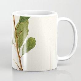 Plums (Prunus Domestica) (1893) by Deborah Griscom Passmore Coffee Mug