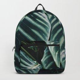 calathea Backpack