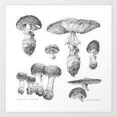 Amanita Muscaria Mushroom Study Art Print