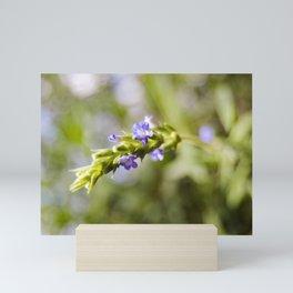 Lily's Lavender Mini Art Print