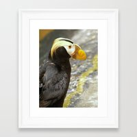 puffin Framed Art Prints featuring Puffin... by Nature In Art...