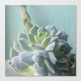 Window Sill Succulent Canvas Print