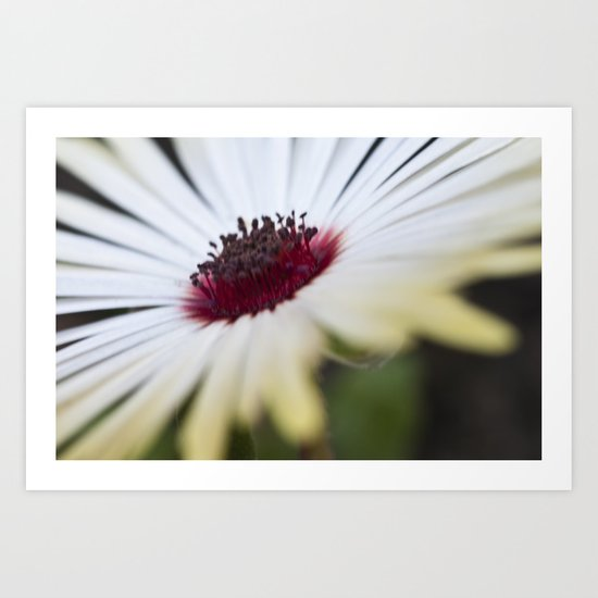 Mesembryanthemum 2 Art Print
